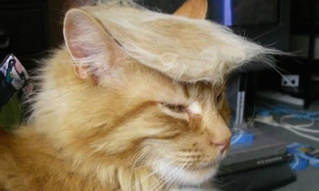 Donald Trump Cats Is Totally A Thing Now!