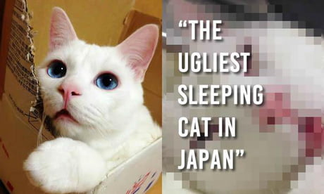"""Cat is given title of """"Most Awful Sleeping Face in Japan"""""""
