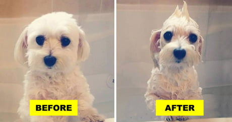 21 Pets Before And After A Bath
