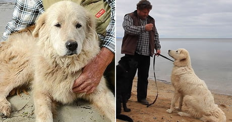 Dog who protected penguins and inspired her own film dies aged 15