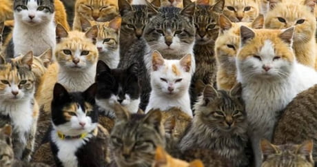 Meow! It's National Cat Day in Japan. These are the amazing things you can do today