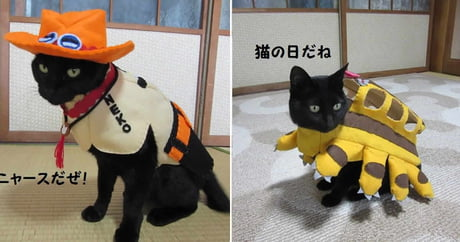 Cosplay Cats Are Taking Over the Internet