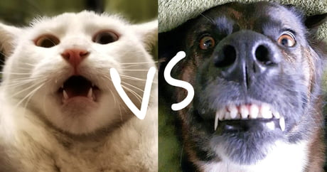 Ugly Cats VS Ugly Dogs! Which side wins?