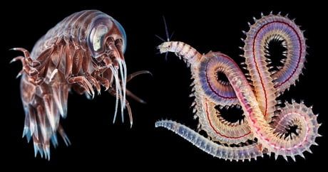 Alexander Semenov Photographs Astonishing Creatures from the Depths of the World's Oceans
