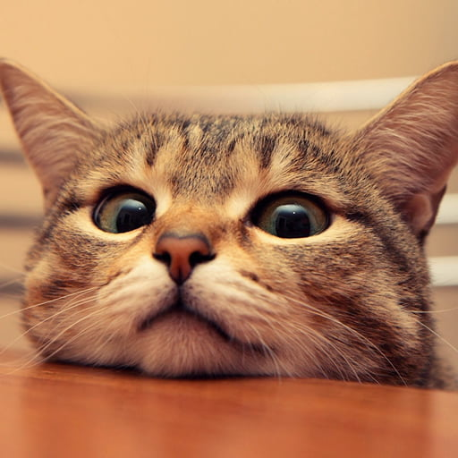 GAG Animals - 20 of the funniest i dont own a cat moments that ever happened to people