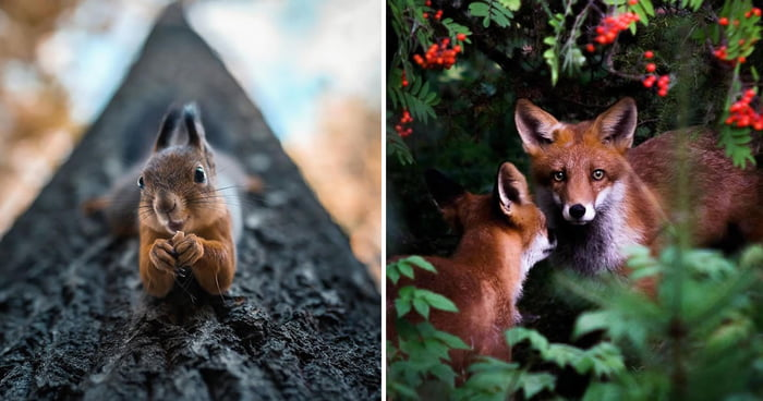 This Guy Takes The Most Magical Photos Of Finnish Forest Animals